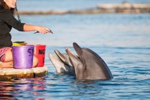 Dolphin Reef, Eilat, Israël