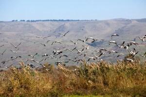 Hula Vallei vogels, vakantie in Israël