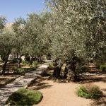 Getsemane Kidrondal, vakantie in Israël