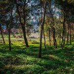 Israel National Trail natuur, vakantie in Israël