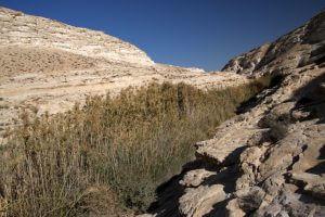 Woestijn van Judea, Arad, vakantie in Israël