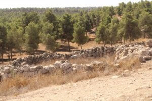 Yatir Forest, Arad, vakantie in Israël