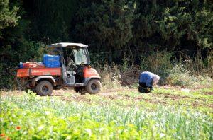 Mosjavs en kibboetsen in Israël, landbouw